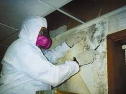 Mold Remediation DUB ...