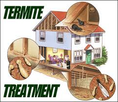 Termite Control Services from Kill Germ Building Maintenance Llc  Dubai,