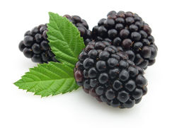 Blackberry supplier from The Organic Syndicate  Ras Al Khaimah,