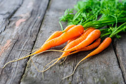 Carrot suppliers  from The Organic Syndicate  Ras Al Khaimah,