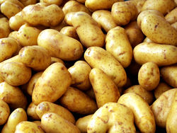 potato  from The Organic Syndicate  Ras Al Khaimah,