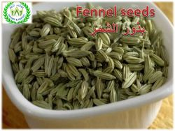 fennel from  Fayom, EGYPT