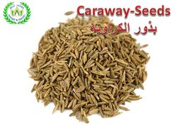 Seeds of caraway from Best Herbs   Fayom,