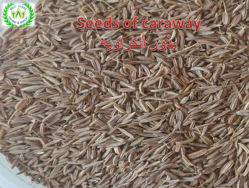 Seeds of caraway Pro ... from  Fayom, EGYPT