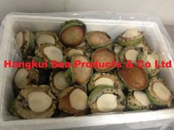 Live Abalones from  ,