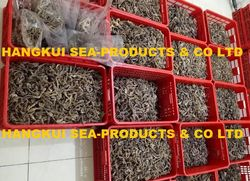 Offers and Deals in UAE For Dried seahorse