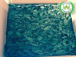 Mulukhiyah Leaves  Production of June 2019  from Best Herbs   Fayom,
