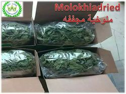 Mulukhiyah Leaves  Production  2019  from Best Herbs   Fayom,