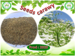 Caraway Prod 2020 in Egypt From Best Herbs  | Be