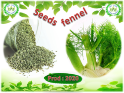 Fennel Prod 2020 in Egypt From Best Herbs  | Be