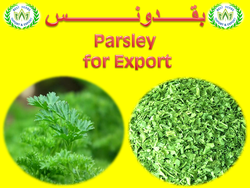 Offers and Deals in UAE For  dried parsley for export